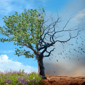 live-dead-tree